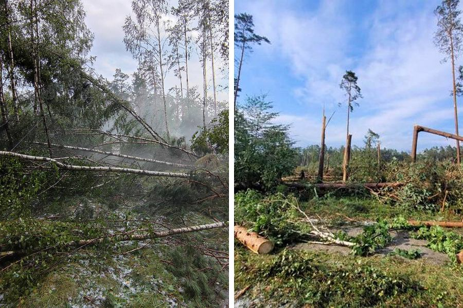 """Hurricane Bori Tucholsky.  A strong wind tore down the trees and threw them away.  """"That was enough"""""""